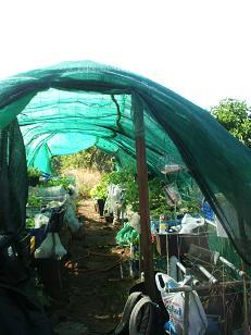 8thlife islas canarias es for Estructura vivero